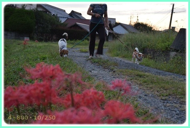 f:id:yasukazu01:20150929225535j:image