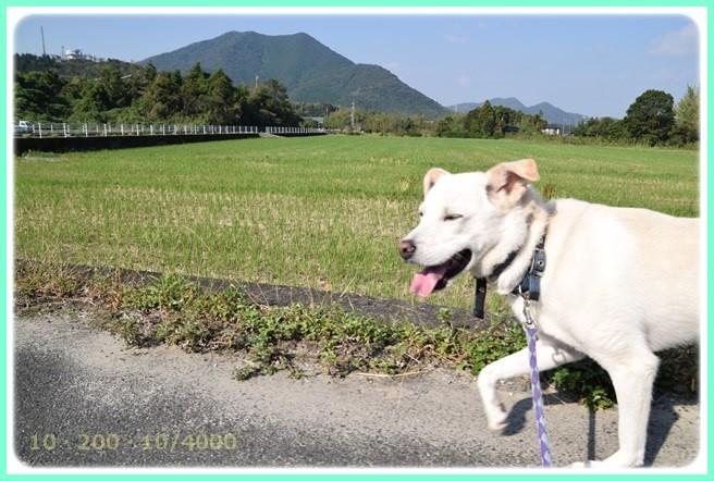 f:id:yasukazu01:20151004211253j:image