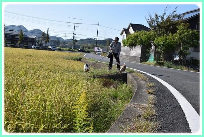 f:id:yasukazu01:20151006214729j:image
