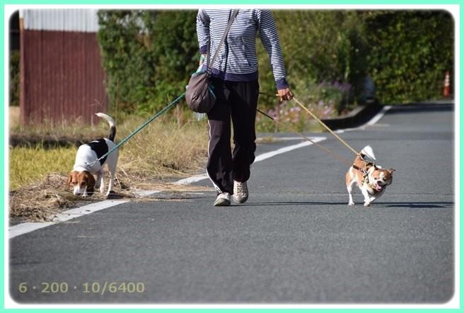 f:id:yasukazu01:20151006215334j:image