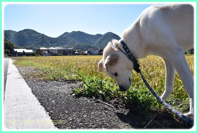 f:id:yasukazu01:20151007194718j:image