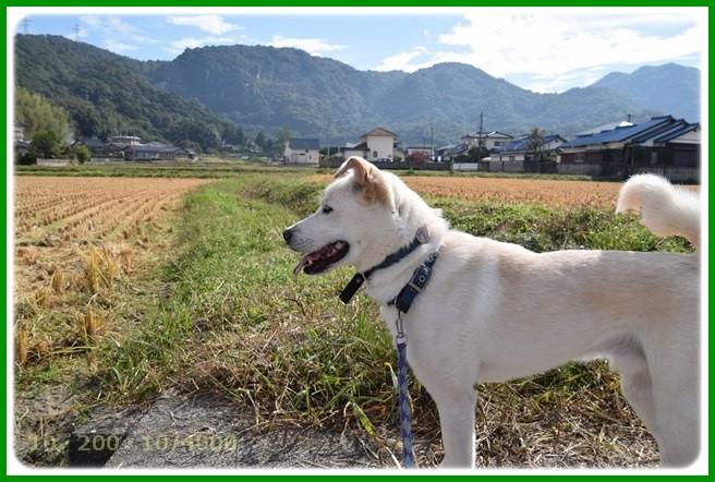 f:id:yasukazu01:20151015194149j:image