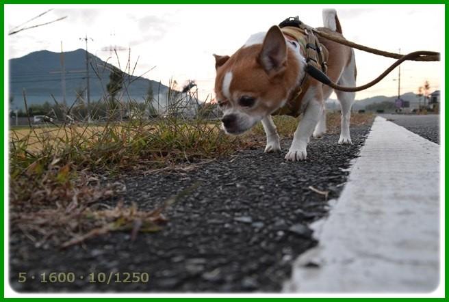 f:id:yasukazu01:20151015194706j:image