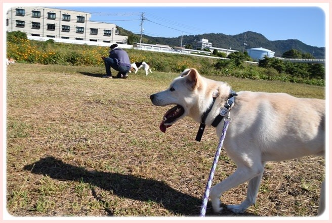 f:id:yasukazu01:20151019191046j:image