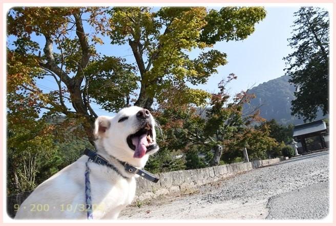 f:id:yasukazu01:20151023120104j:image