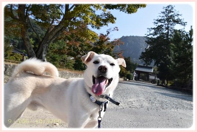 f:id:yasukazu01:20151023120137j:image