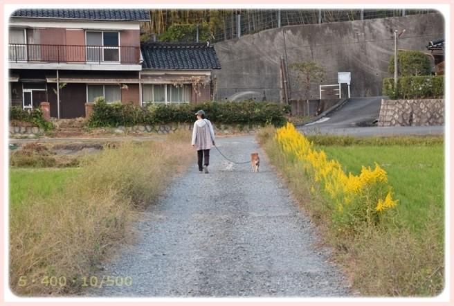 f:id:yasukazu01:20151023120943j:image