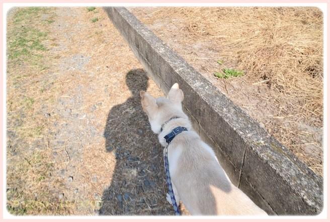 f:id:yasukazu01:20151024105220j:image