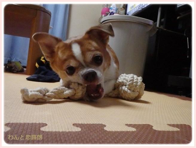 f:id:yasukazu01:20151024105931j:image