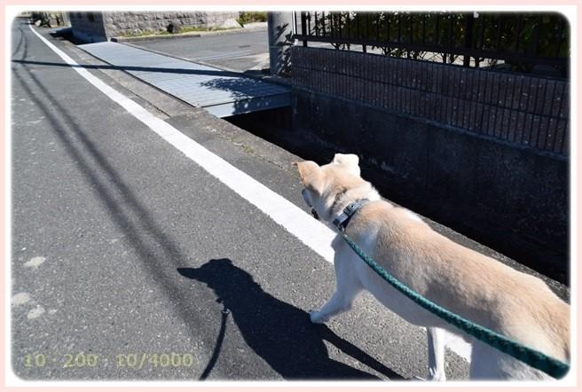 f:id:yasukazu01:20151025191504j:image