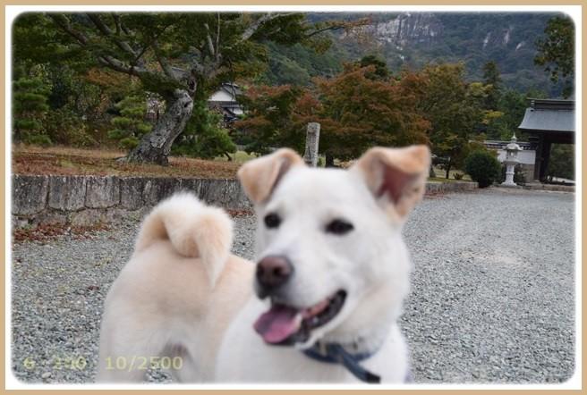 f:id:yasukazu01:20151101212144j:image