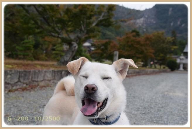 f:id:yasukazu01:20151101212212j:image