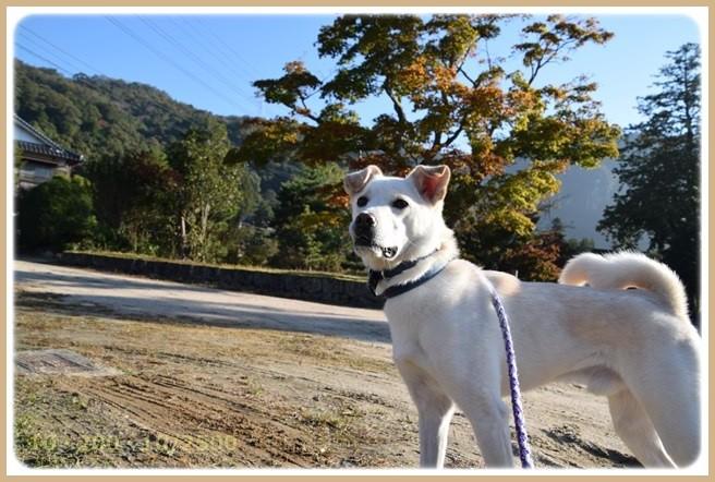 f:id:yasukazu01:20151104210918j:image