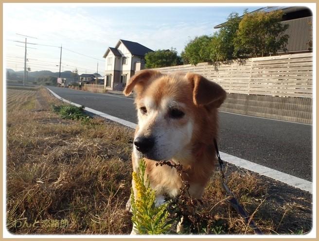 f:id:yasukazu01:20151105194921j:image