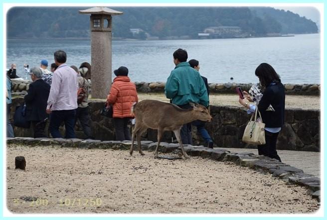f:id:yasukazu01:20151110201351j:image