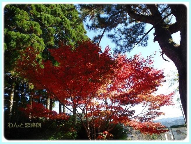 f:id:yasukazu01:20151111191752j:image