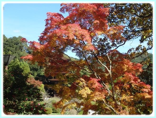 f:id:yasukazu01:20151111193052j:image