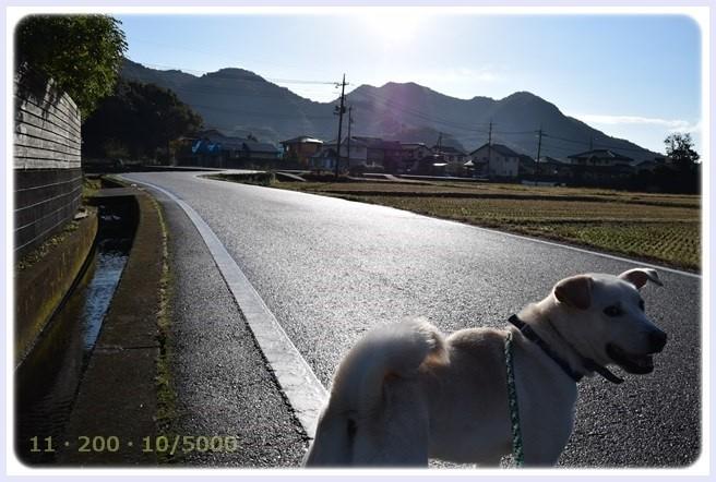 f:id:yasukazu01:20151118192731j:image