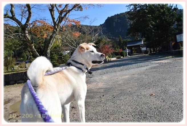 f:id:yasukazu01:20151126212333j:image