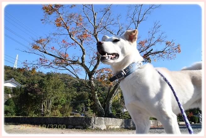 f:id:yasukazu01:20151126212346j:image