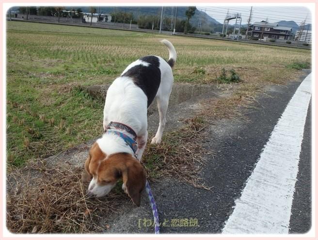 f:id:yasukazu01:20151129200039j:image