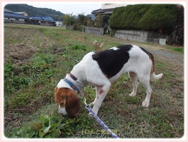 f:id:yasukazu01:20151129200344j:image