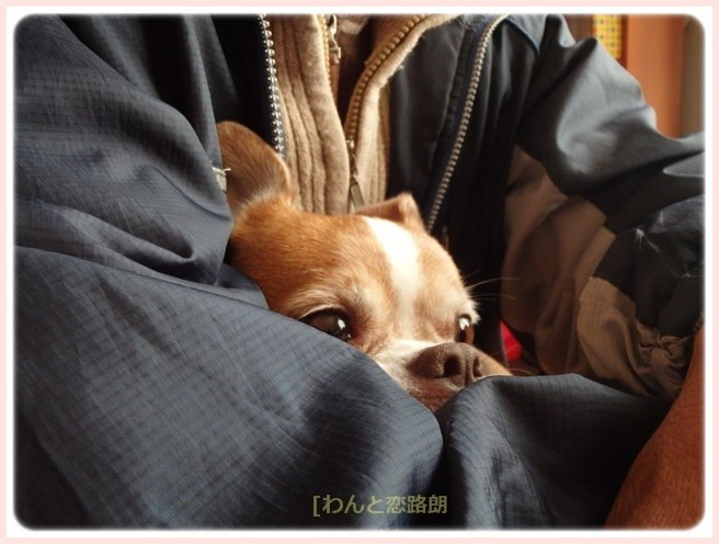 f:id:yasukazu01:20151129201054j:image