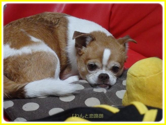 f:id:yasukazu01:20151205183631j:image