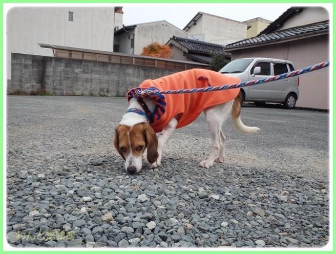 f:id:yasukazu01:20151208194049j:image