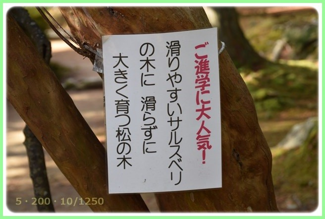 f:id:yasukazu01:20151215193646j:image