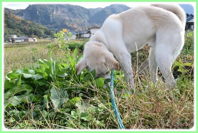 f:id:yasukazu01:20151215200351j:image