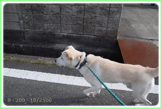f:id:yasukazu01:20151215200541j:image