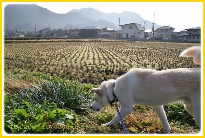 f:id:yasukazu01:20151227195115j:image