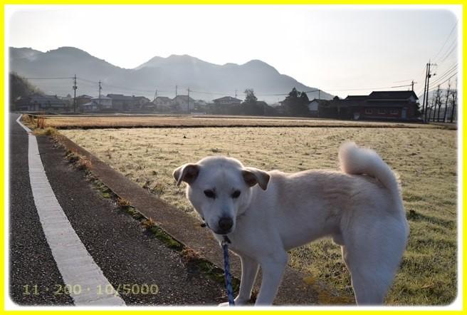 f:id:yasukazu01:20160102174217j:image
