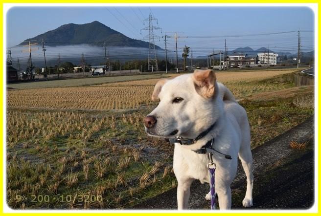 f:id:yasukazu01:20160102174242j:image