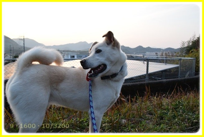 f:id:yasukazu01:20160102175355j:image