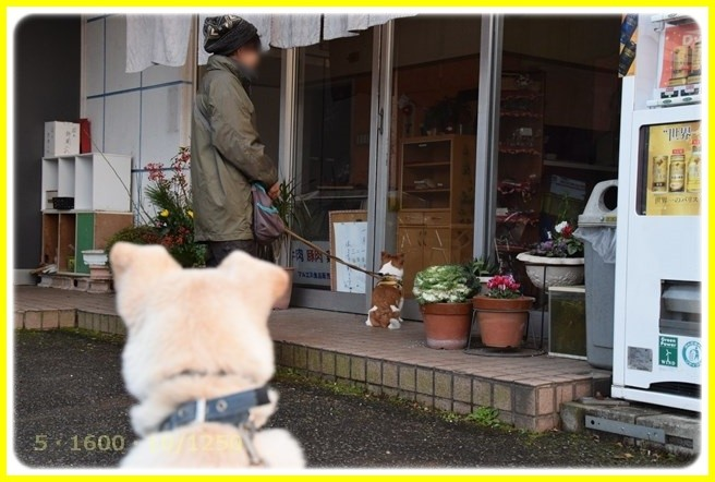 f:id:yasukazu01:20160102180049j:image
