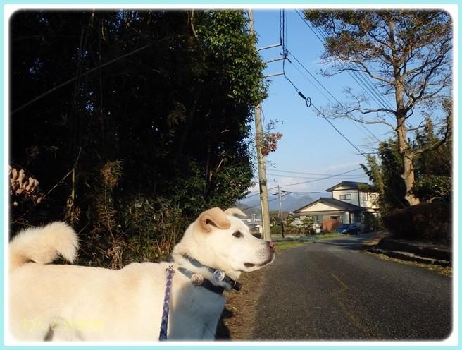 f:id:yasukazu01:20160114191707j:image