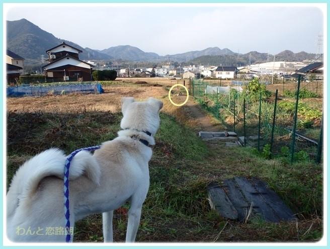 f:id:yasukazu01:20160114191847j:image