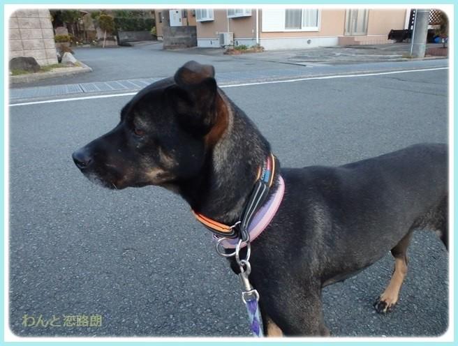 f:id:yasukazu01:20160114194140j:image