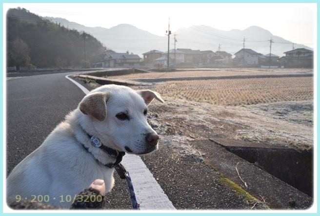 f:id:yasukazu01:20160116202933j:image