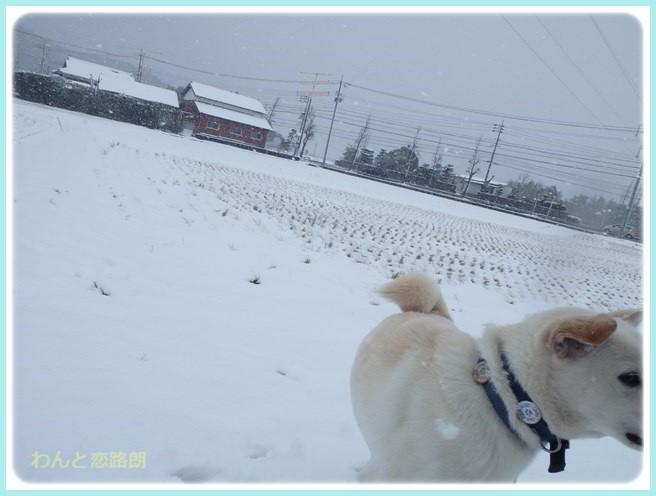 f:id:yasukazu01:20160121200130j:image