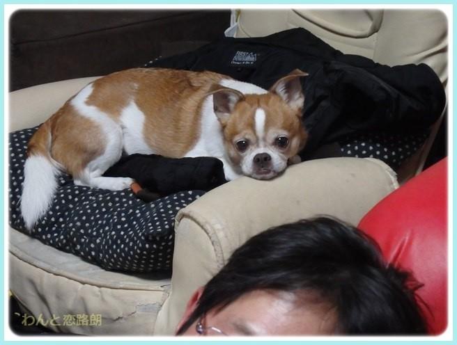 f:id:yasukazu01:20160129210057j:image