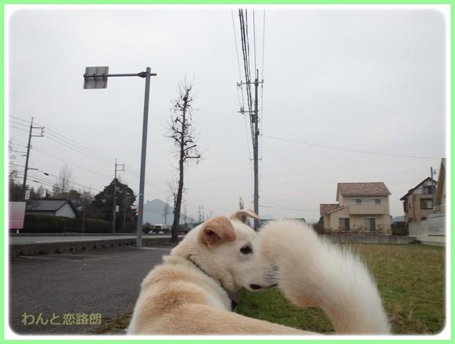 f:id:yasukazu01:20160201193314j:image
