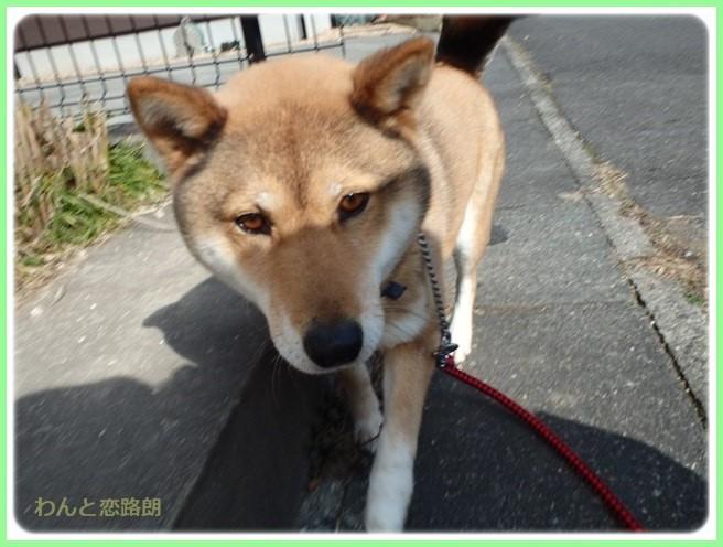 f:id:yasukazu01:20160210184858j:image