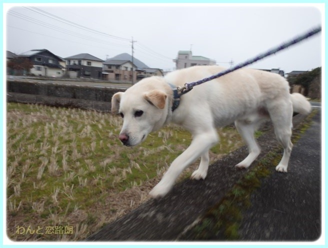f:id:yasukazu01:20160229184622j:image