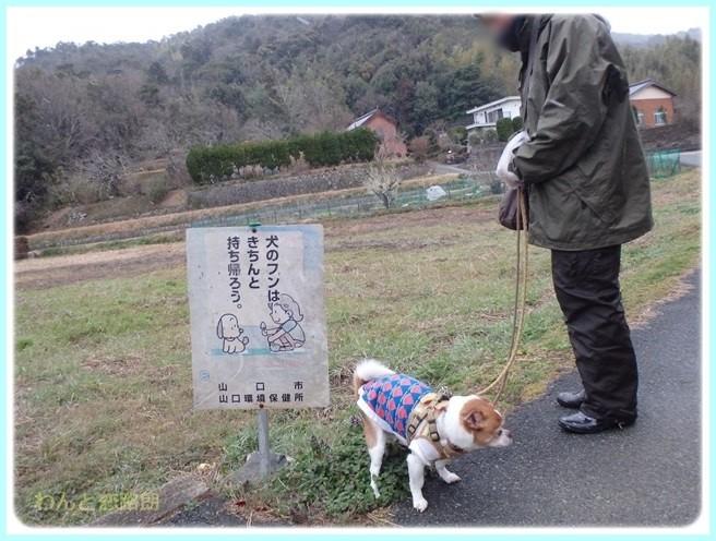 f:id:yasukazu01:20160229184846j:image