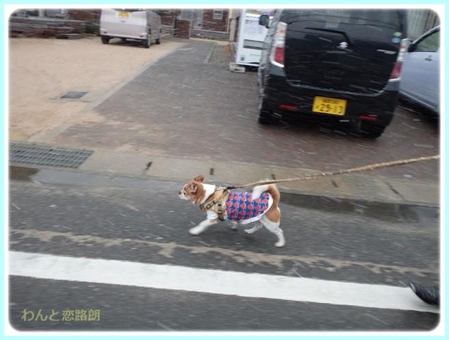 f:id:yasukazu01:20160229185305j:image