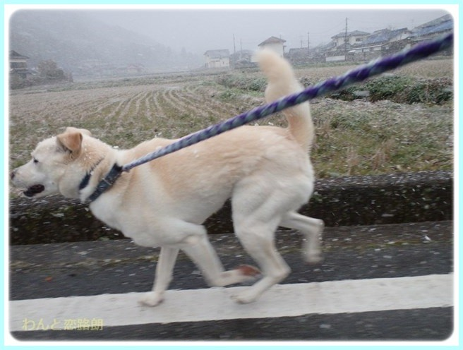 f:id:yasukazu01:20160229185449j:image