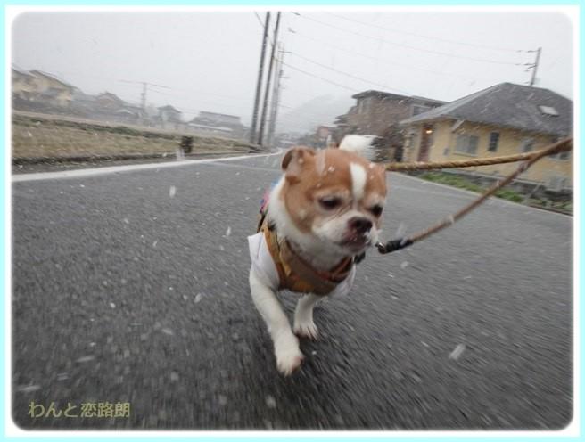 f:id:yasukazu01:20160229185559j:image
